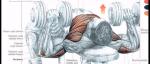 Nejlepší cviky pro bodybuilding