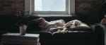 Spánek je nejlepší způsob, jak si dobít energii