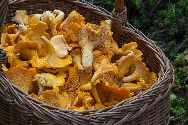 Jak zpracovat houby ke konzumaci a uskladnění